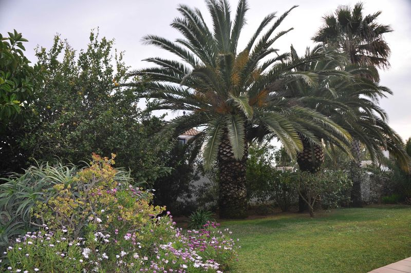 Villa Palmeras Garten (1)