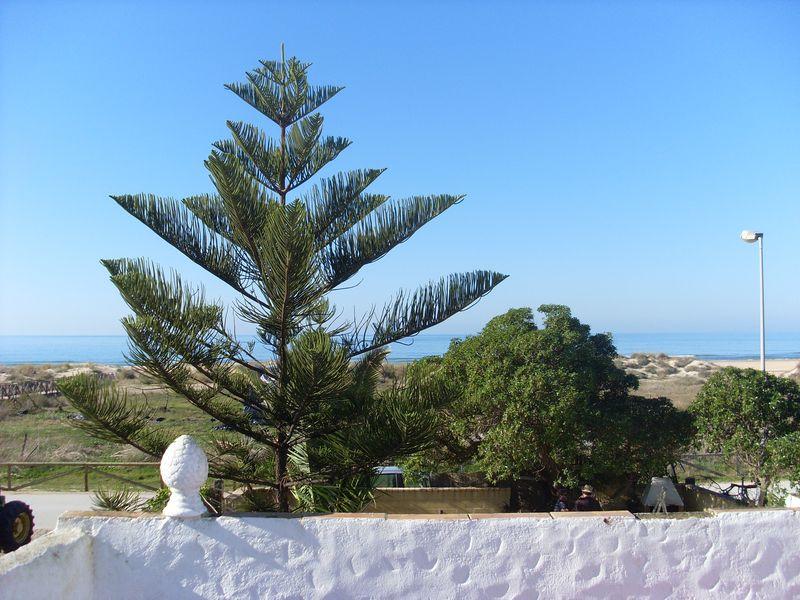 Beach House Lola (3)